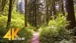 nature-walk-4k