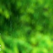 Calming Sounds of a Rainy Day