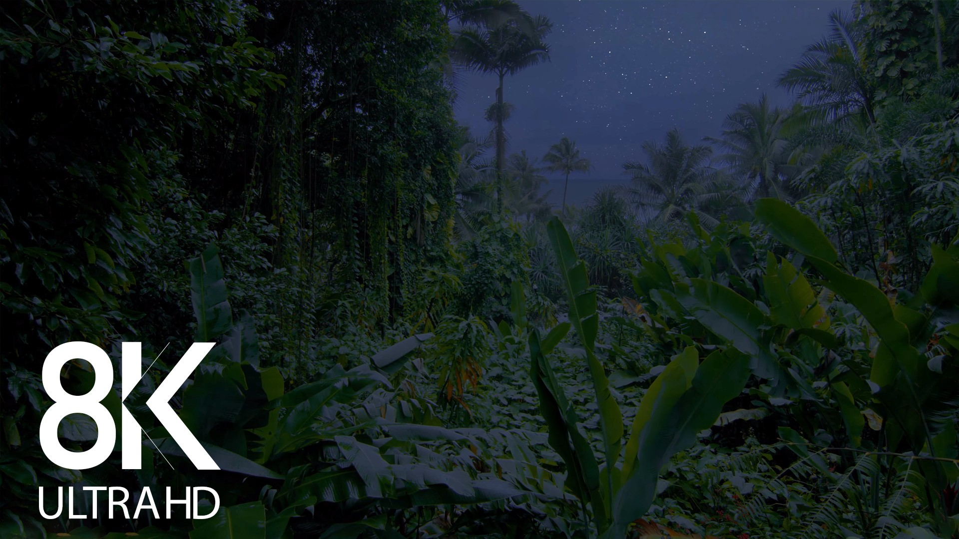 Jungle Nightlife Sounds Part 1