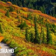 Autumn Foliage in Washington State