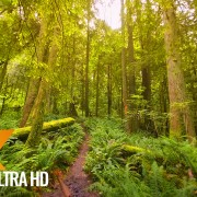 High Point Trail, Issaquah area Nature Walking Tour