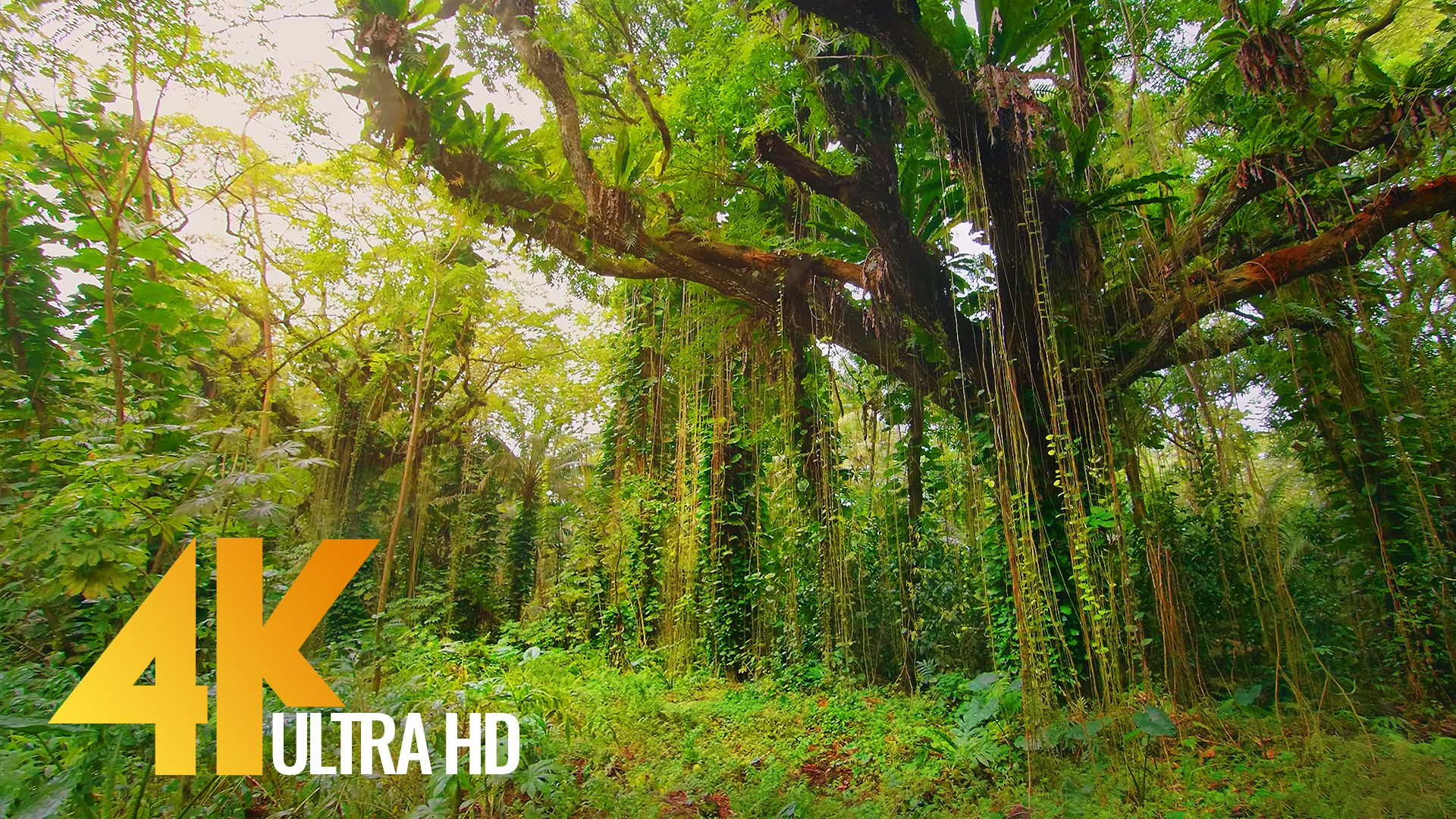 Puna Forest Reserve Hawaii, Big Island Nature Walking Tour