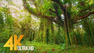 Puna Forest Reserve Hawaii, Big Island Nature Walking Tour
