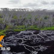 lava-hawaii