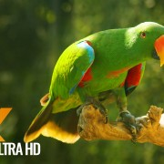 Bali Indonesia Natur Relax Video___