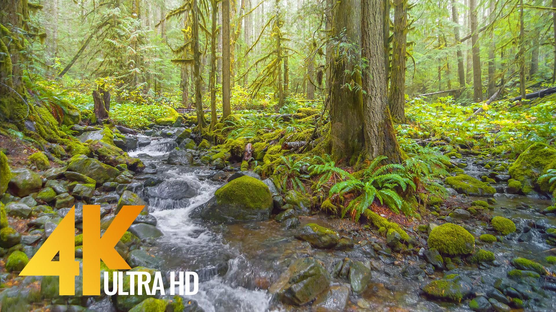 Nooksack Falls and Wells Creek Washington State Nature Relax