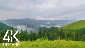 Rainy Mystery of the Carpathian Mountains