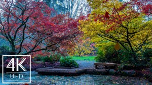 Animated_Screensaver_with_Relaxing_Ambient_Music_Fall_Foliage_2