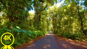Hawaii Roads front 8 Scenic drive