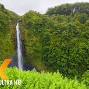 NCREDIBLE DIVERSITY OF THE BIG ISLAND, HAWAII PART 2 Short