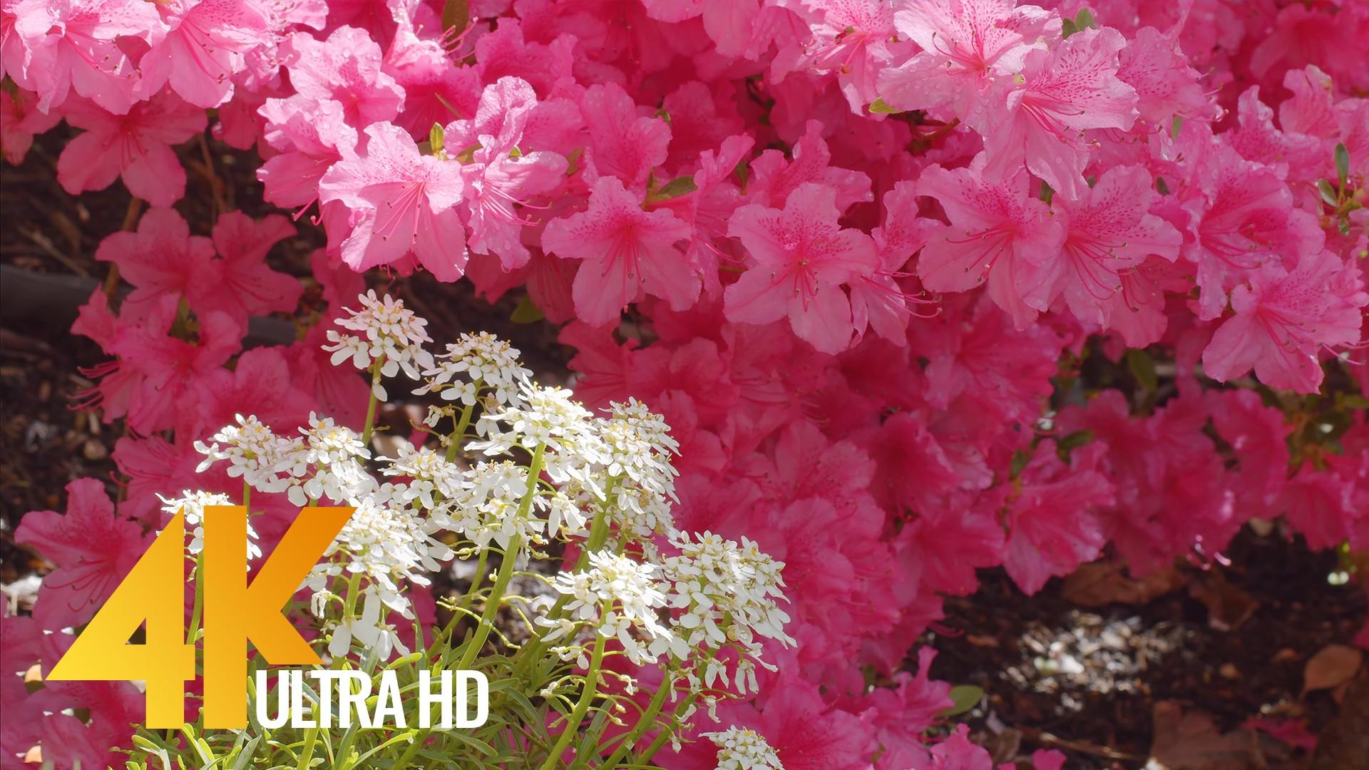 Summer day in a beautiful flower garden Short Preview