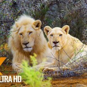 African Wildlife Sanbona Nature Relax Video