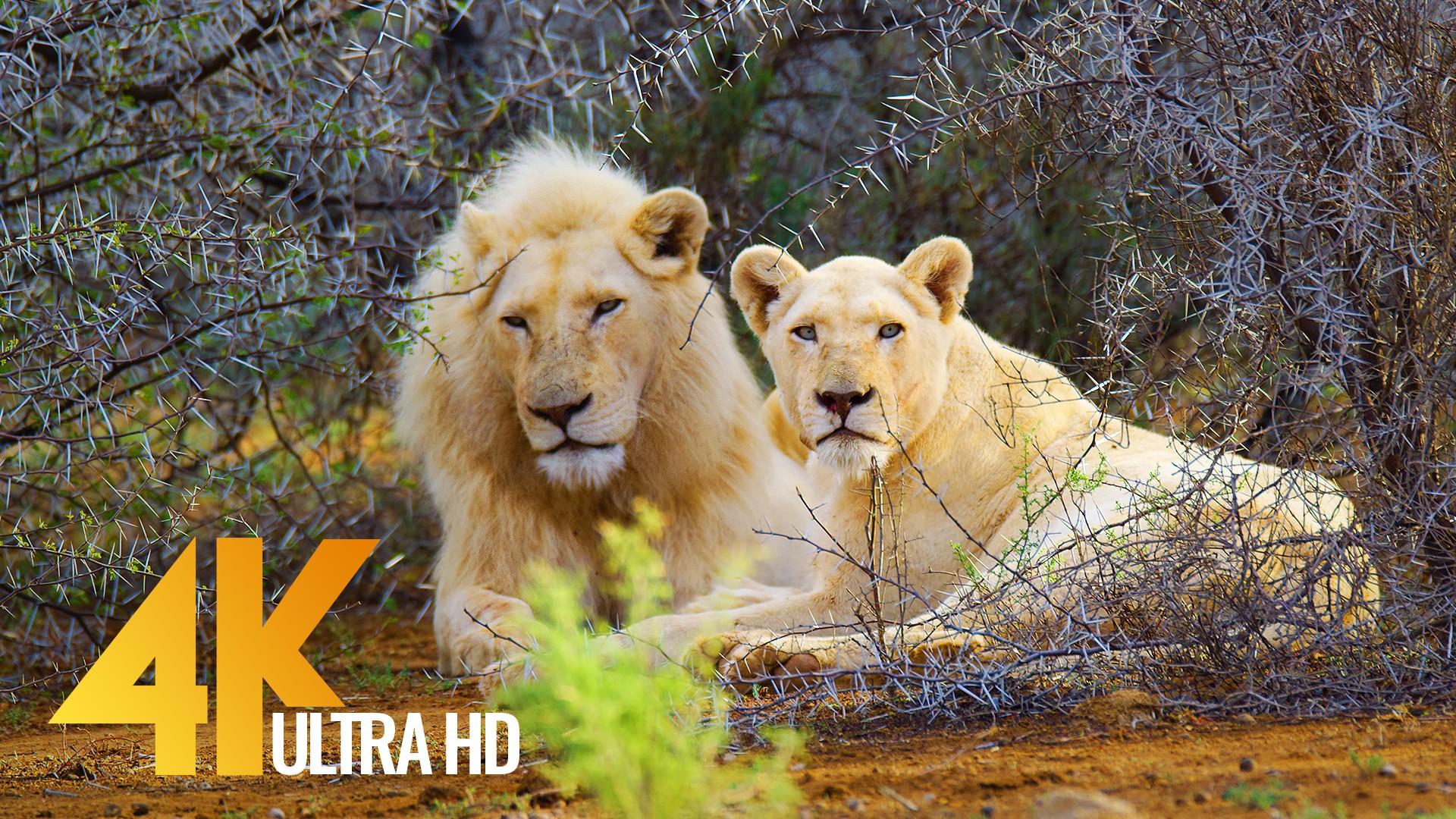 African Wildlife Sanbona Nature Relax Video