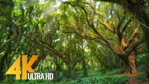 Amazing Forests of the United States Nature relax video