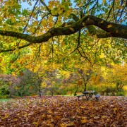 FALL FOLIAGE 3 Animation Relax