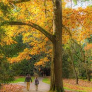 FALL FOLIAGE 4 Animation Relax Video