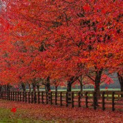 FALL FOLIAGE 5 Animation Relax