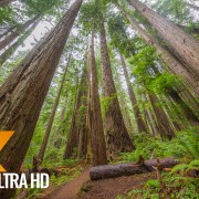 Nature Walk along the Trail of the Cedars