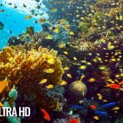 RED SEA INHABITANTS Underwater Relaxation Video