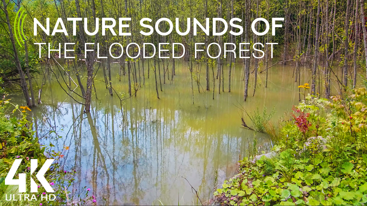 4k_Flooded_forest_of_the_Carpathian_mountains_8_hours_YOUTUBE