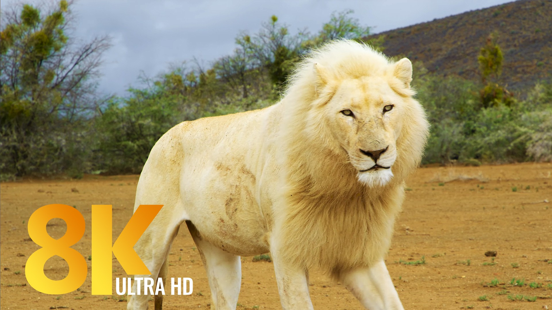 Sanbona Nature Documentary