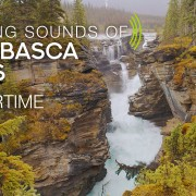 4k_Calming_Sounds_of_Athabasca_Falls_Wintertime_Canada_8_HOUR_YOUTUBE