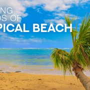 4k_TROPICAL_BEACH_FOR_RELAXING_Nature_Relax_Video_8_HOURS_YOUTUBE