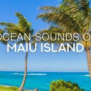 4k_Tropical_Palms_Maui_island,_Hawaii_Nature_Relax_Video_8_HOURS