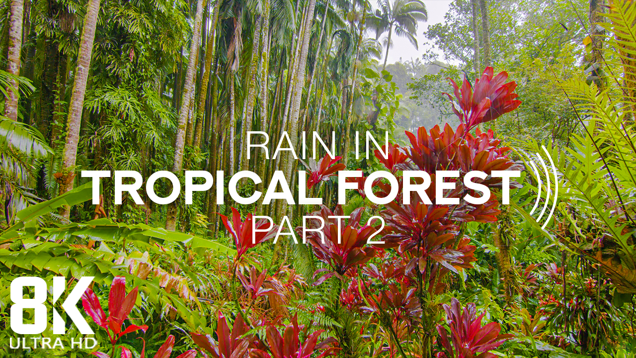 8k_Rain_in_Tropical_Forest_Part_2_Nature_Relax_Video_8_Hours_YOUTUBE (2)