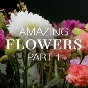 AMAZING FLOWERS 1 8K 10 BIT COLOR YOUTUBE