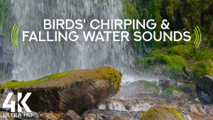 The_Gentle_Music_of_Falling_Water_Oregon_Waterfalls_Nature_Relax