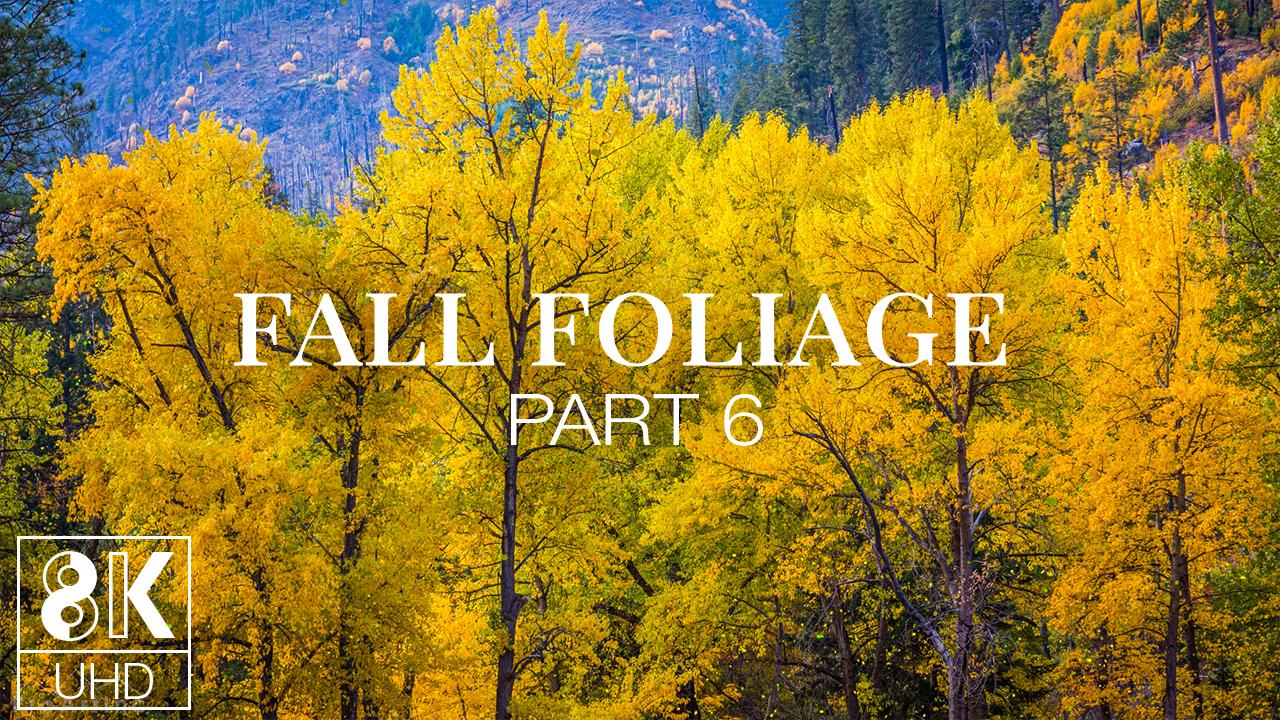 fall-6