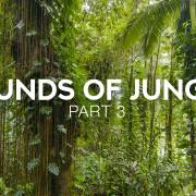 jungle-3