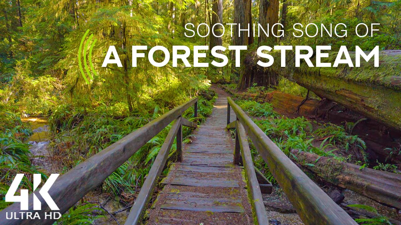 stream-shady-forest