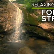 4k Forest Stream Nature Relax Video 8 Hours YOUTUBE