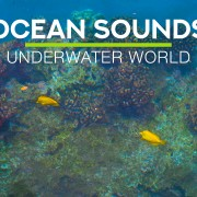 4k The Beauty of the Underwater World 8 HOURS YOUTUBE