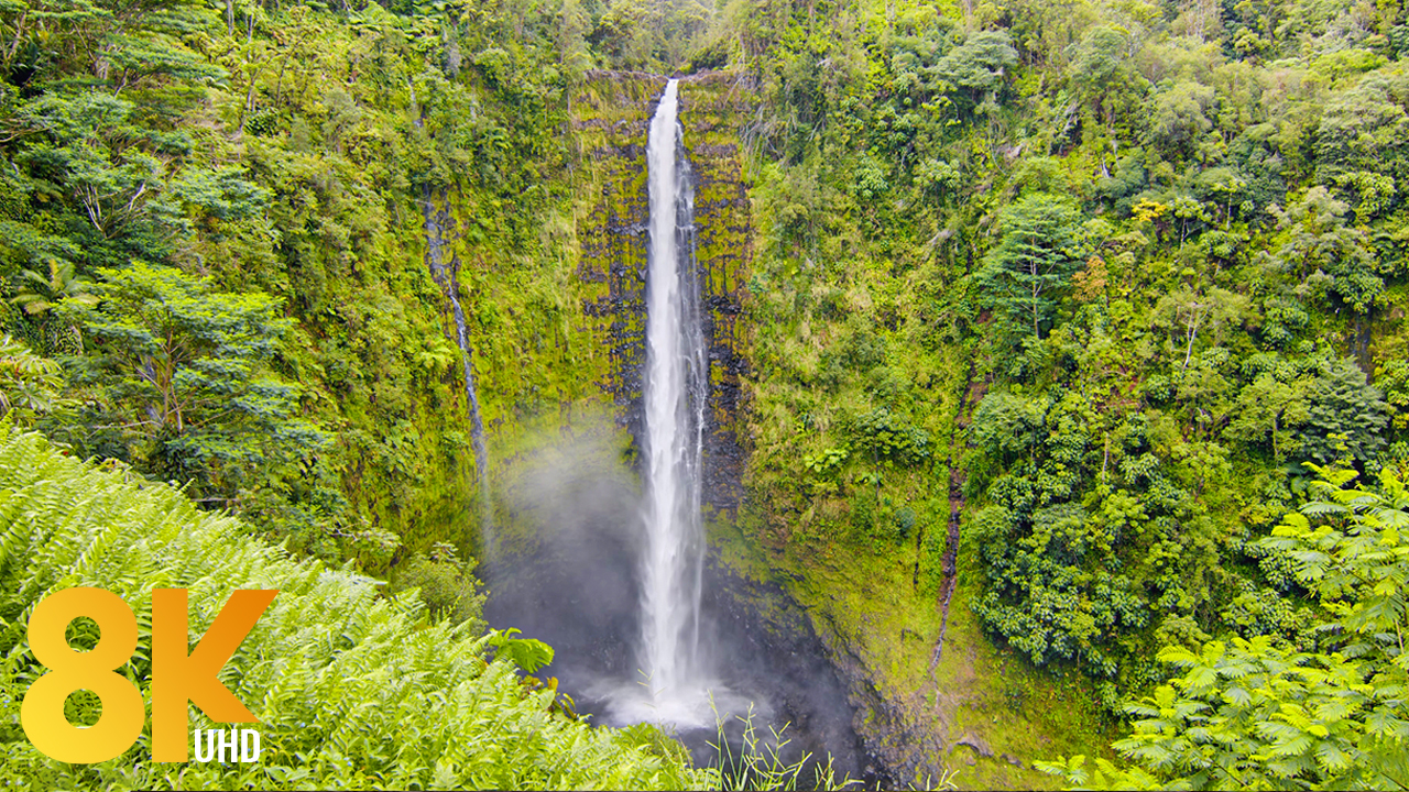 8k Akaka Falls Big Island`s Gem Nature Relax Video YOUTUBE