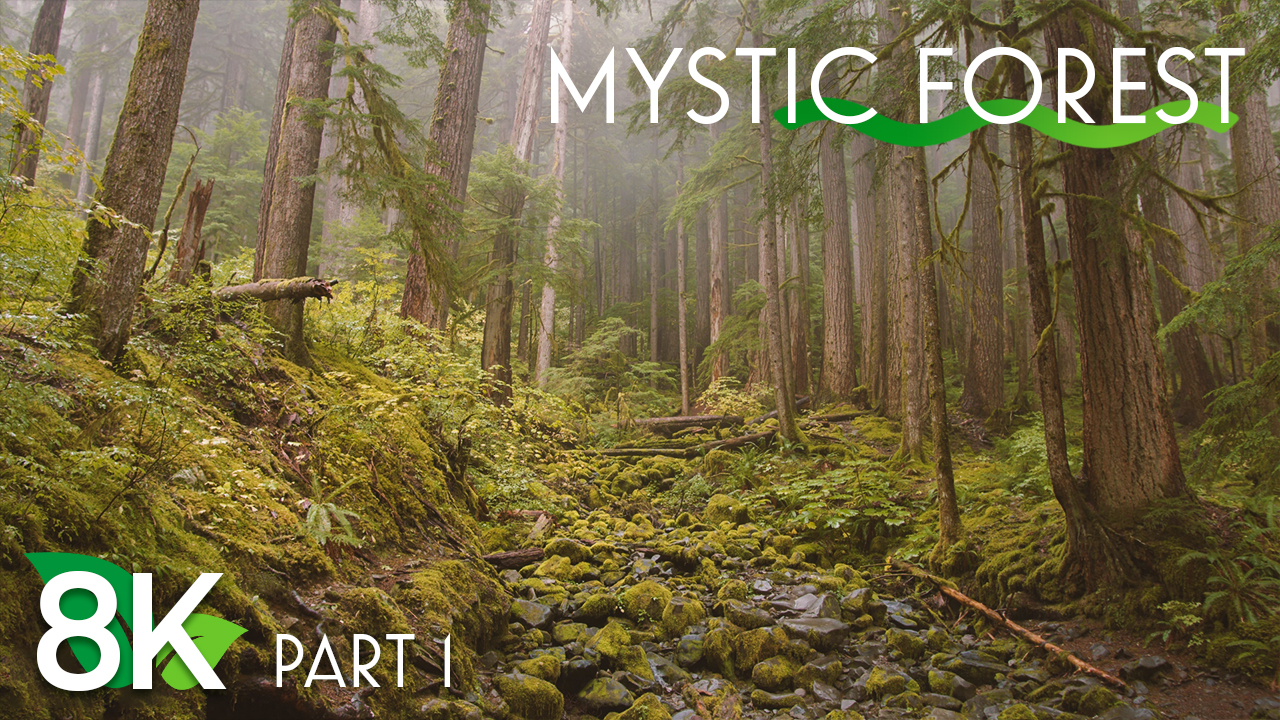 8k MYSTIC FOREST EPISODE 1 3 HOURS YOUTUBE