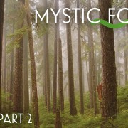 8k MYSTIC FOREST EPISODE 2 3 HOURS YOUTUBE