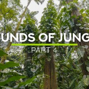 8k SOUNDS OF JUNGLE PART 4 8 HOUR YOUTUBE