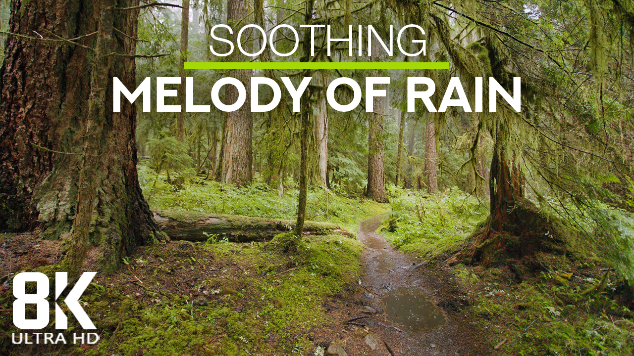 8k_Rain_in_a_Fairytale_Forest_Nature_Relax_Video_8_Hours_YOUTUBE