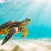 Amazing Underwater World of the Red Sea 4 (2)