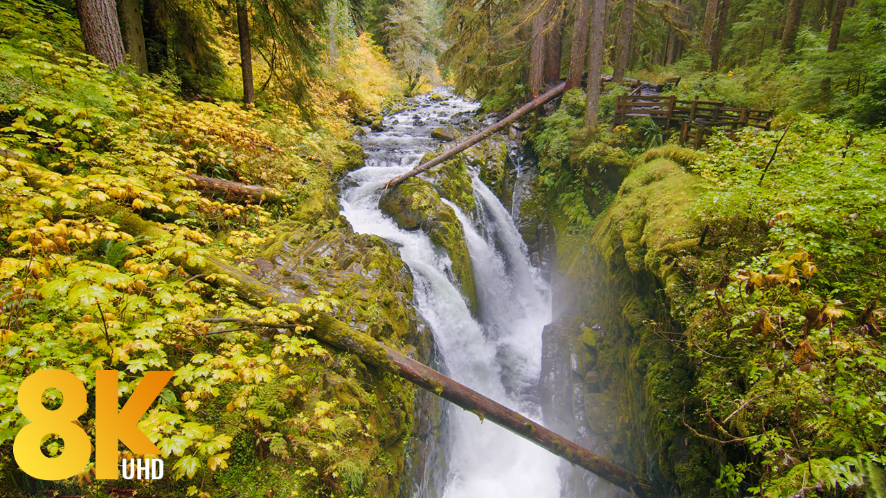 8k_Autumn_Charm_of_Sol_Duc_Falls,_Olympic_National_Park,_WA_Nature