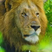 4k BEST OF AFRICA Part 1 Documentary Film YOUTUBE