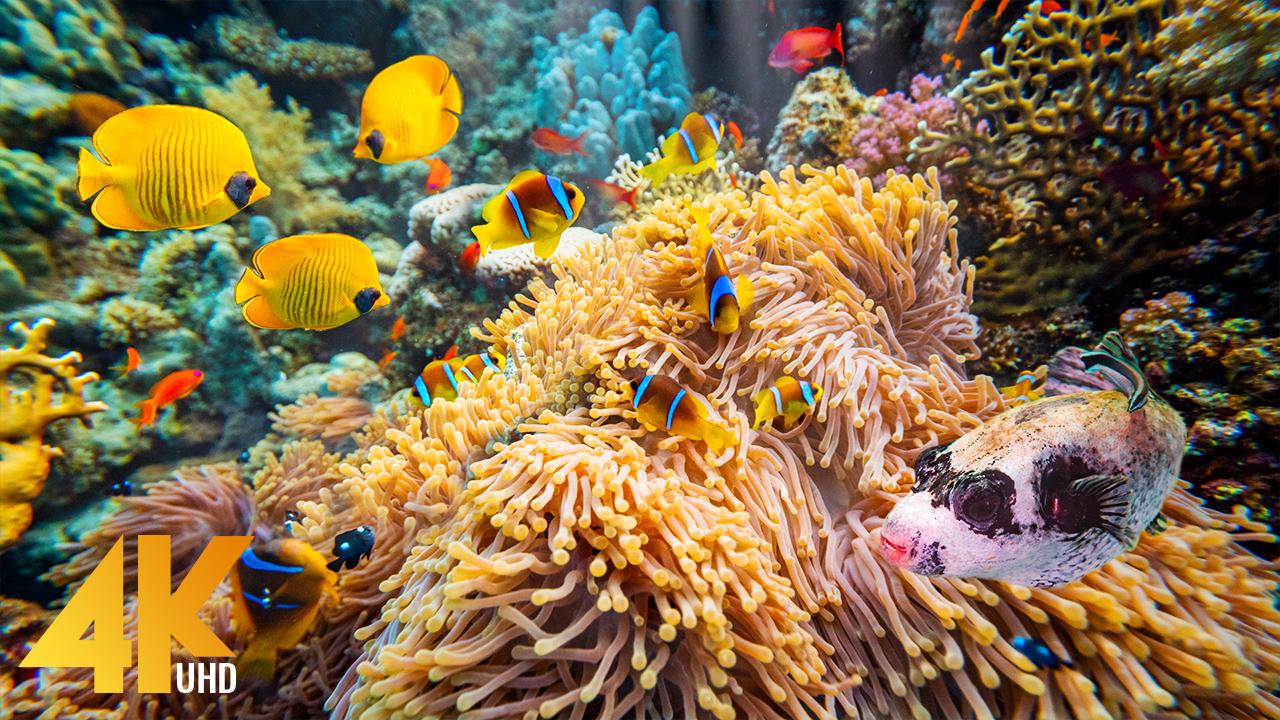 4k_Amazing_Underwater_World_of_the_Red_Sea_5_Underwater_Relax_Video