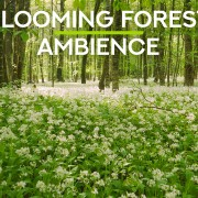 4k_Blooming_summer_forest_North_Caucasus_Russia_NATURE_RELAX_VIDEO