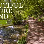 8_HRS_Soothing_Bird_Songs_+_Gentle_Water_Sounds_for_Relaxation_4K