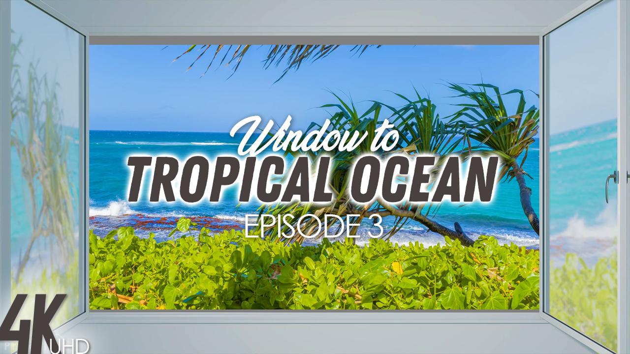 4K_Tropical_Ocean_View_Hawaii_Episod_#3_NATURE_RELAX_VIDEO_8_housr