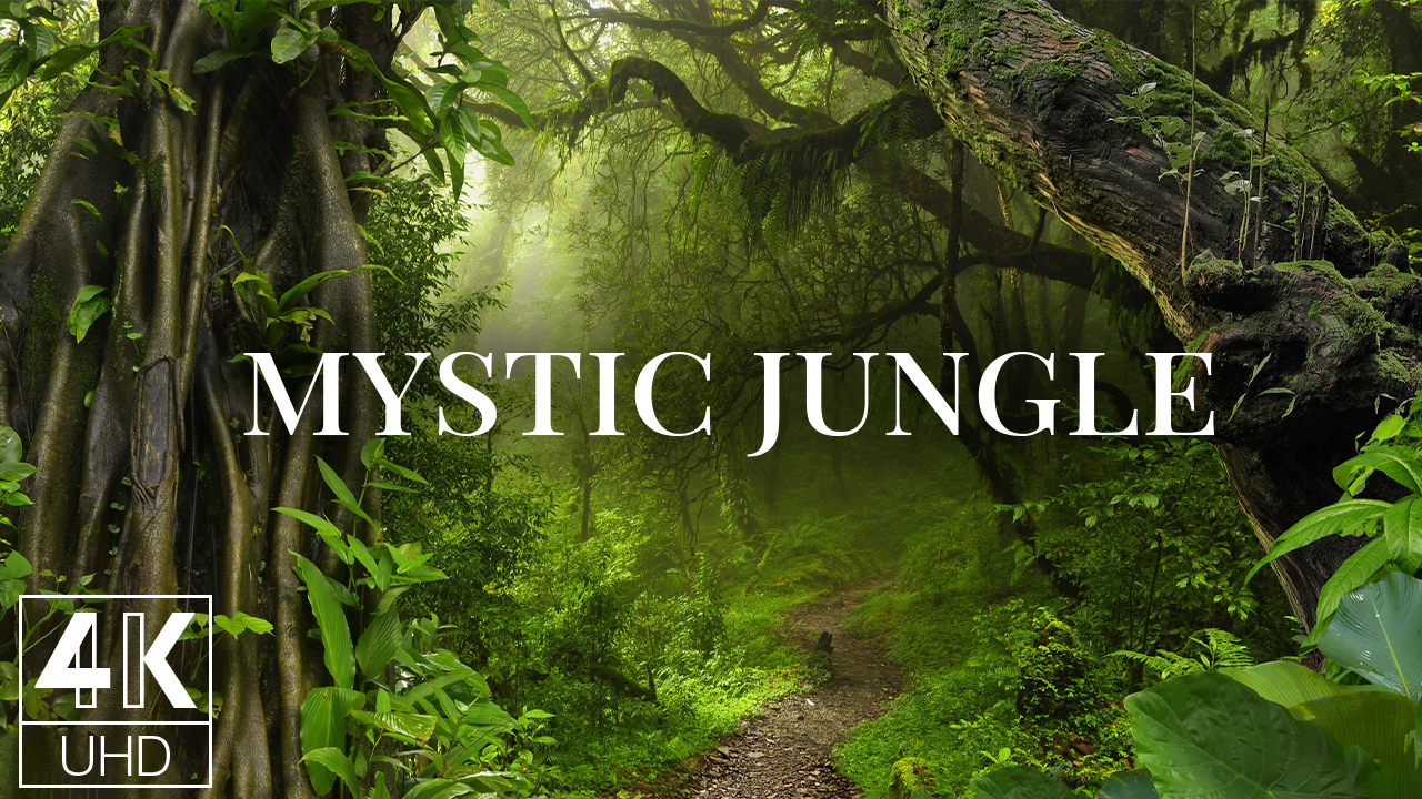 4k MYSTIC JUNGLE FOREST Nature Relax Video 12 Hours YOUTUBE