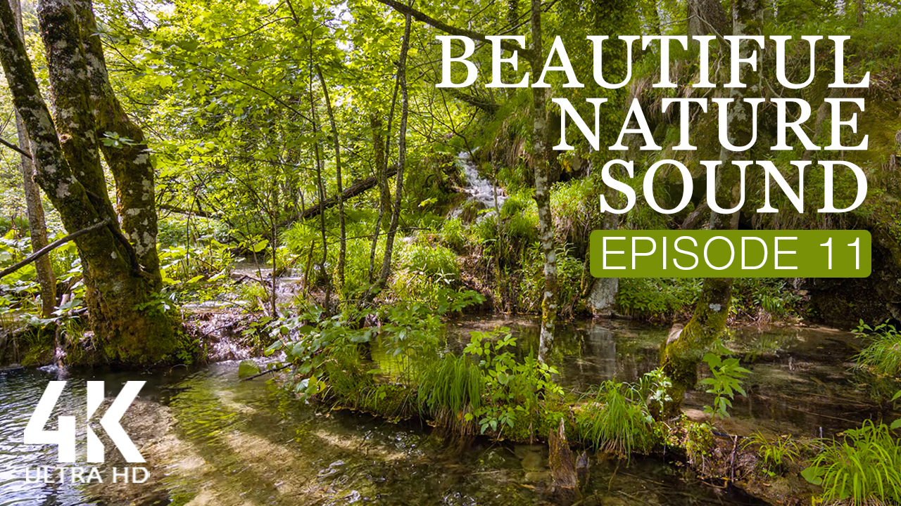 4k_Beautiful_Nature_Sound_Episode_11_NATURE_RELAX_VIDEO_8_hours